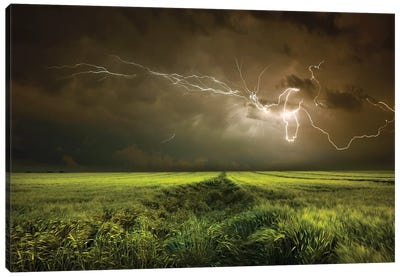 Electrically In Summer Canvas Art Print