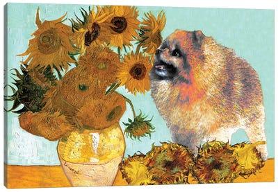 Pomeranian Sunflowers Canvas Art Print