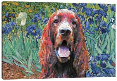 Irish Setter Irises Canvas Art Print