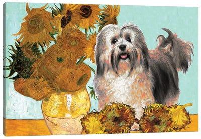 Havanese Dog Sunflowers Canvas Art Print