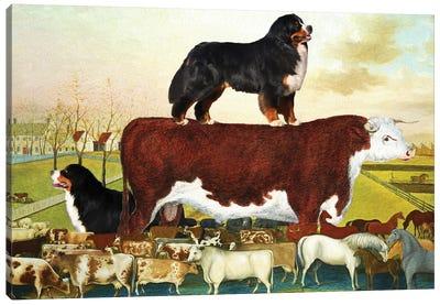 Bernese Mountain Dog The Cornell Farm Canvas Art Print
