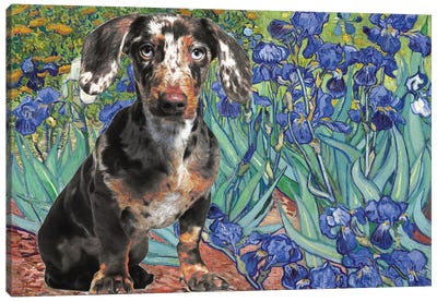 Dachshund Irises Canvas Art Print