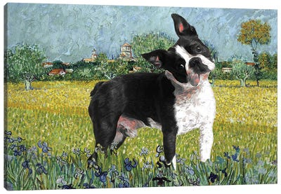 Boston Terrier View Of Arles With Irises Canvas Art Print