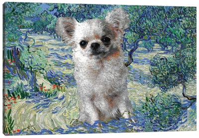 Long Haired Chihuahua Olive Orchard Canvas Art Print