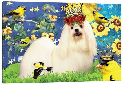 Maltese Dog And American Goldfinch Canvas Art Print
