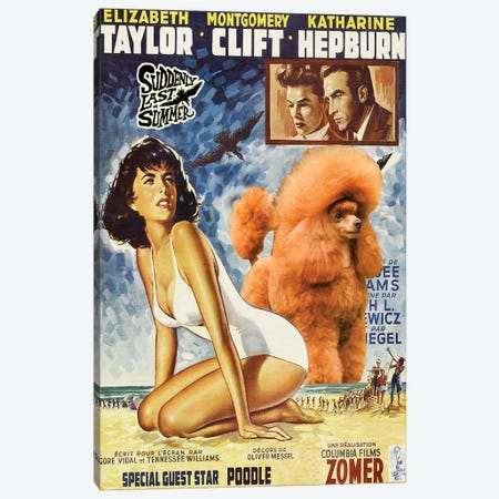 Poodle Suddenly Last Summer Movie Canvas Print #NDG425} by Nobility Dogs Canvas Print