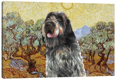 Wirehaired Pointing Griffon Olive Trees Canvas Art Print