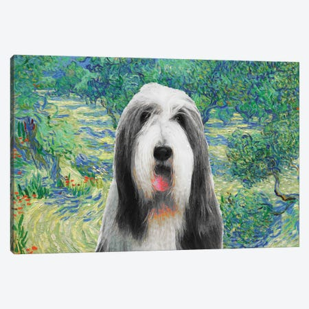 Bearded Collie Olive Orchard Canvas Print #NDG589} by Nobility Dogs Canvas Art Print