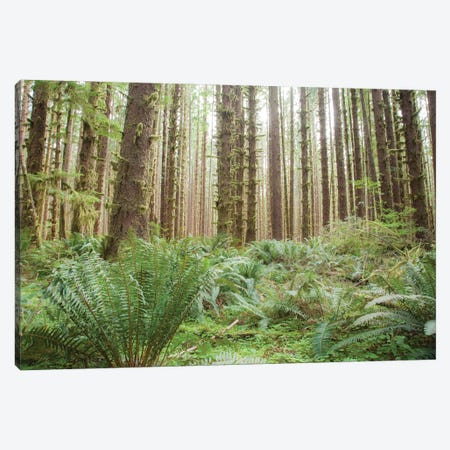 Trees in the Hoh Olympic National Park, Washington State. Canvas Print #NDS14} by Michele Niles Canvas Art