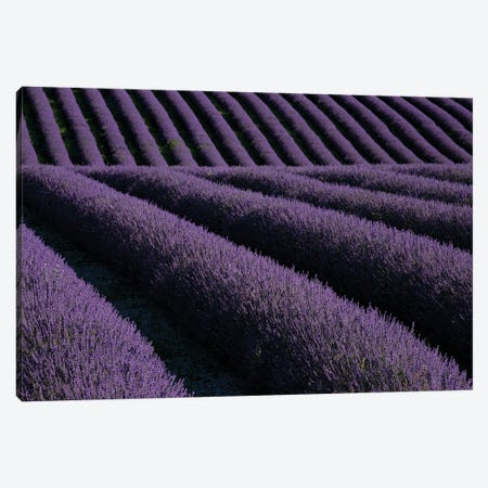 Lavender fields on Valensole Plain, Provence, Southern France. Canvas Print #NDS8} by Michele Niles Canvas Wall Art