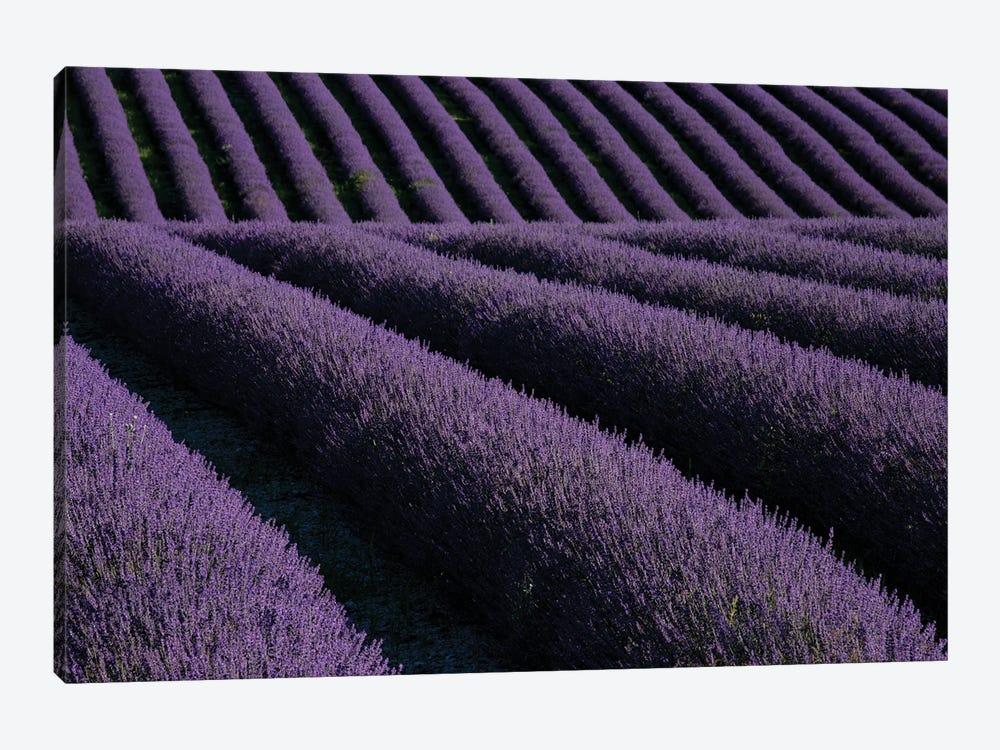 Lavender fields on Valensole Plain, Provence, Southern France. by Michele Niles 1-piece Canvas Art