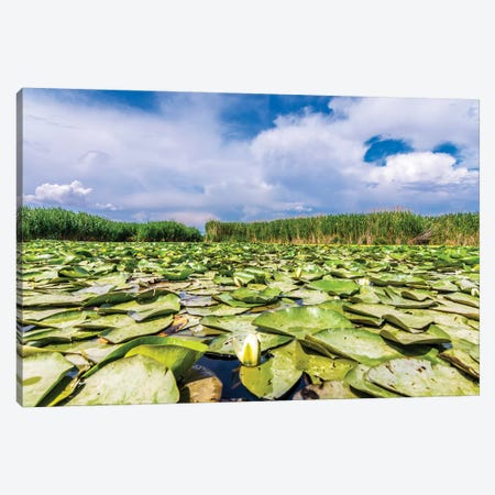 Lotus Field Canvas Print #NEJ102} by Nejdet Duzen Canvas Artwork