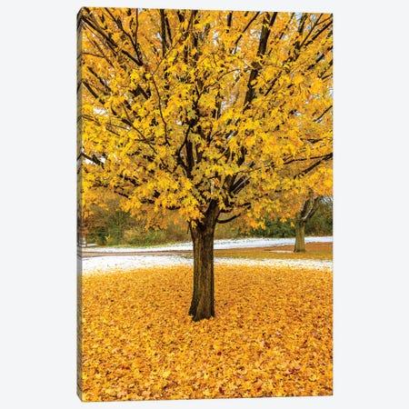 Yellow Foliage Canvas Print #NEJ134} by Nejdet Duzen Canvas Art