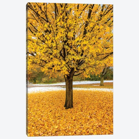 Yellow Foliage Canvas Print #NEJ134} by Nejdet Duzen Canvas Art