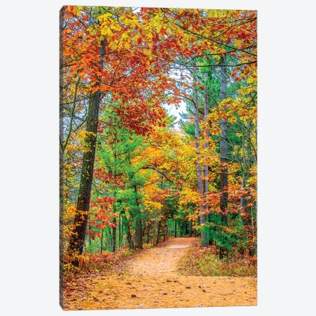 Road To Forest Canvas Print #NEJ146} by Nejdet Duzen Canvas Print