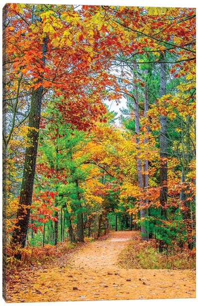Road To Forest Canvas Art Print