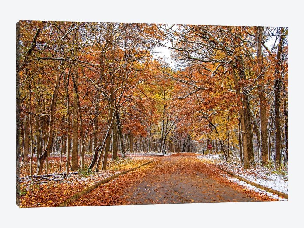 Colorful Wood by Nejdet Duzen 1-piece Canvas Art