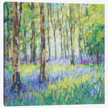 Bluebell Woods Canvas Print #NER42} by Jennifer Gardner Canvas Art
