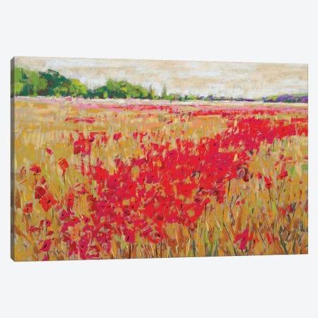 Poppies' Evening Light II Canvas Print #NER7} by Jennifer Gardner Canvas Art Print