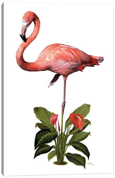 Frollein Flamingo Canvas Art Print