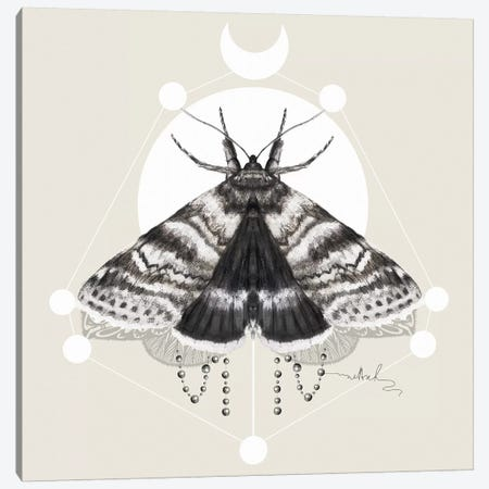 Moth Canvas Print #NET24} by Nettsch Canvas Art Print