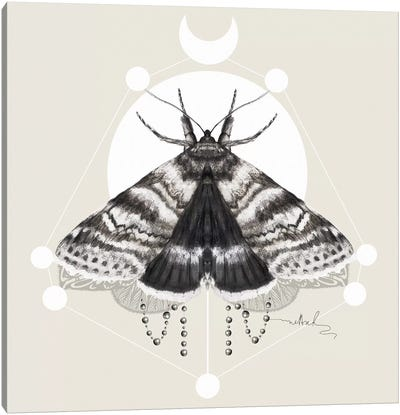 Moth Canvas Art Print