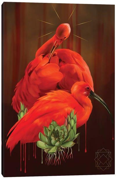 Ibis Canvas Art Print