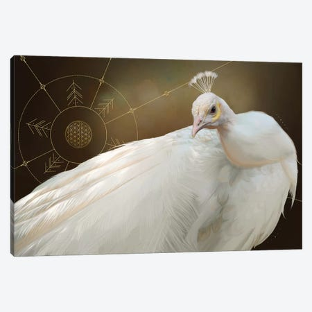 White Peacock Canvas Print #NET64} by Nettsch Canvas Print