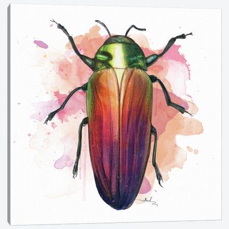 Belionota Sumptuosa Canvas Print #NET6} by Nettsch Art Print