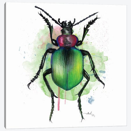 Calosoma Sycophanta Canvas Print #NET7} by Nettsch Canvas Print