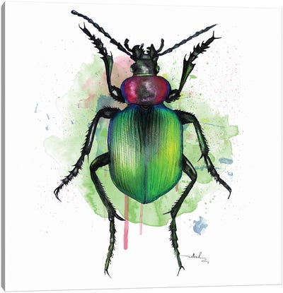 Calosoma Sycophanta Canvas Art Print