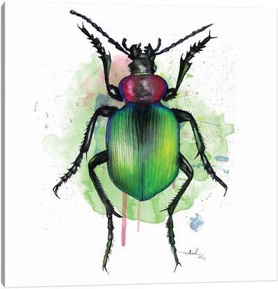 Calosoma Sycophanta Canvas Art Print