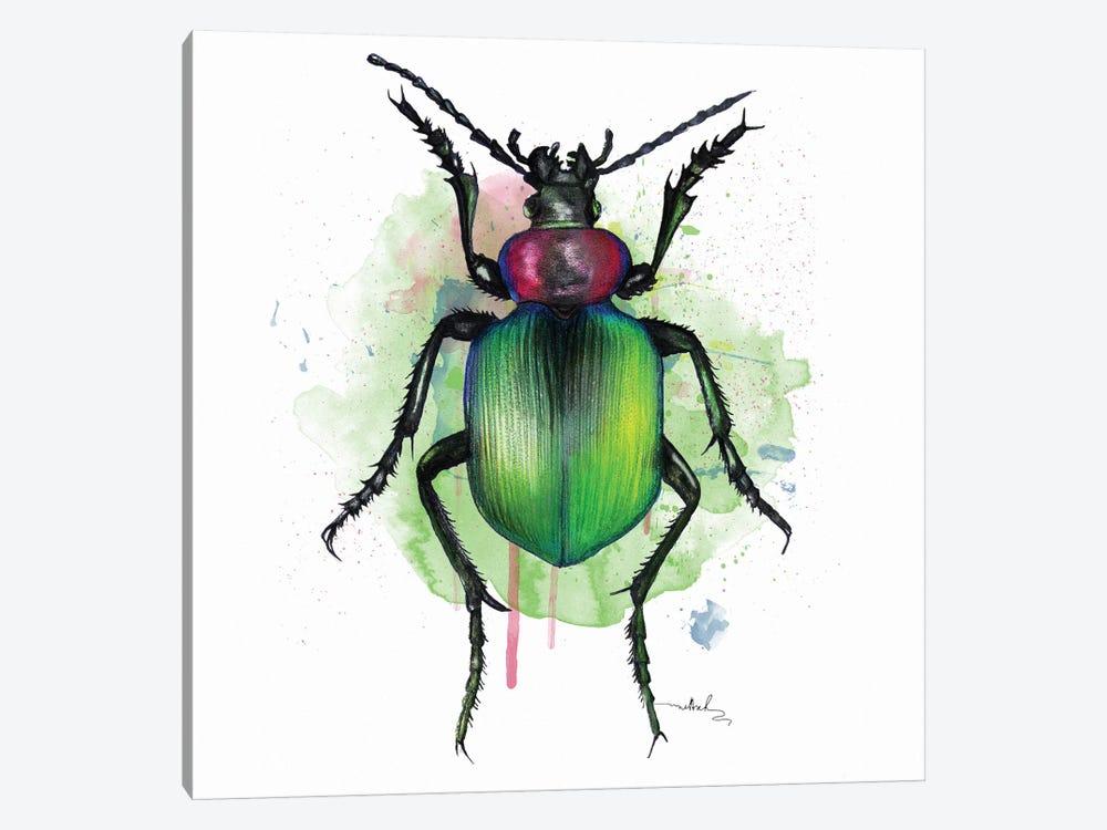 Calosoma Sycophanta by Nettsch 1-piece Canvas Print