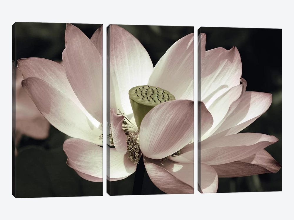 The Blossom by Andy Neuwirth 3-piece Canvas Wall Art