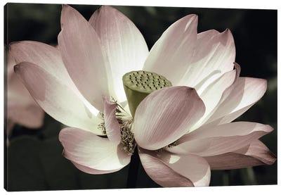 The Blossom Canvas Art Print