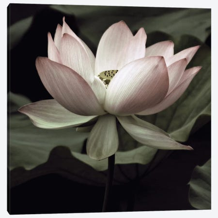 The Lotus I Canvas Print #NEU2} by Andy Neuwirth Canvas Print