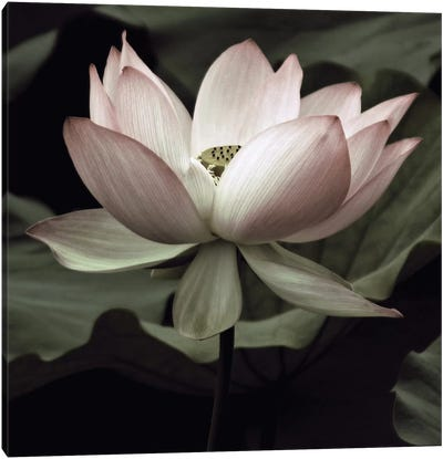 The Lotus I Canvas Art Print