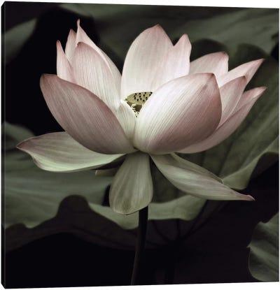 The Lotus I Canvas Art Print