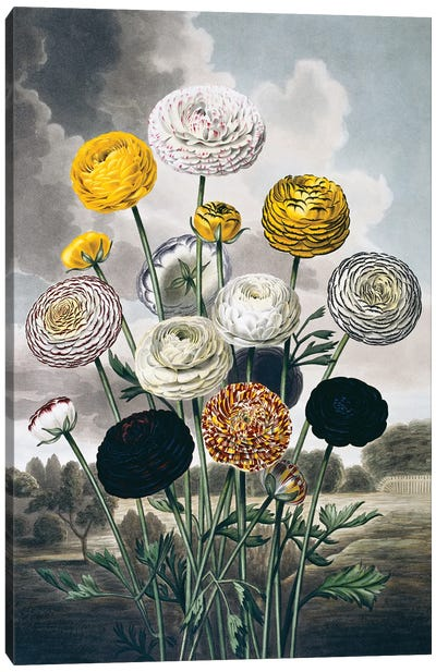 Beauties Of Flora Plate 10 From The Beauties Of Flora 1820, By Samuel Curtis (1779-1860). Canvas Art Print