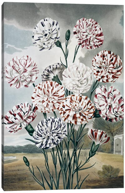 Beauties Of Flora Plate 7 From The Beauties Of Flora 1820, By Samuel Curtis (1779-1860). Canvas Art Print