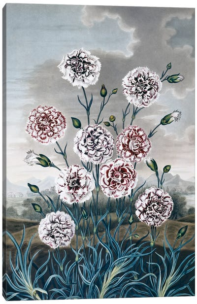 Beauties Of Flora Plate 8 From The Beauties Of Flora 1820, By Samuel Curtis (1779-1860). Canvas Art Print