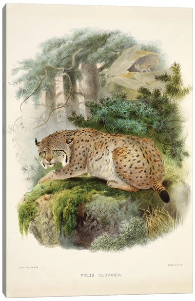 A Monograph Of The Felidae, Or Family Of The Cats By Daniel Giraund VII Canvas Art Print