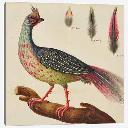 Blood Pheasant, Hintze Hall Canvas Print #NHM114} by Natural History Museum (UK) Canvas Art
