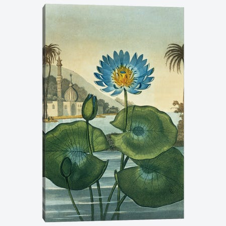 Blue Egyptian Water Lily Canvas Print #NHM115} by Natural History Museum (UK) Canvas Wall Art