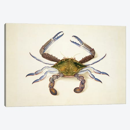 Blue Swimming Crab Canvas Print #NHM120} by Natural History Museum (UK) Canvas Wall Art