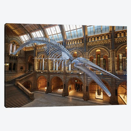 Blue Whale Hintze Hall X Canvas Print #NHM122} by Natural History Museum (UK) Canvas Art