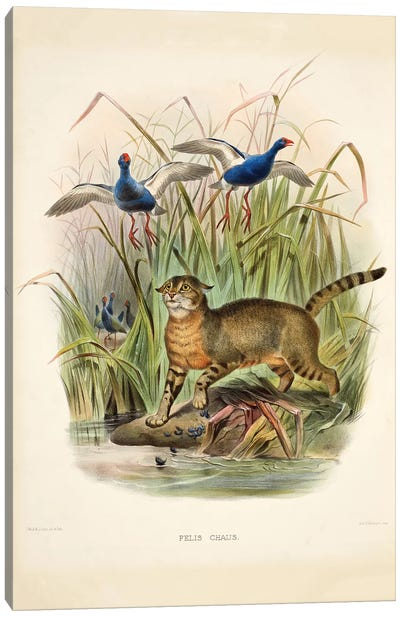 A Monograph Of The Felidae, Or Family Of The Cats By Daniel Giraund X Canvas Art Print