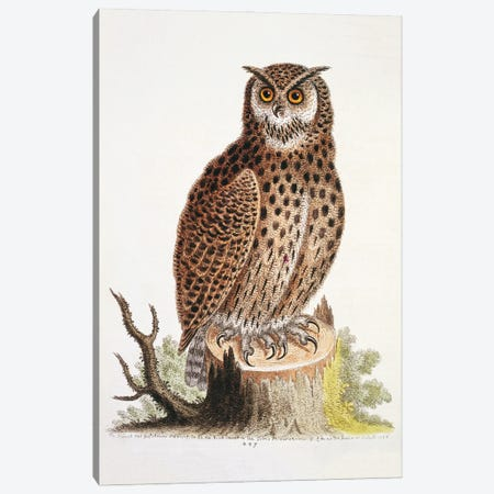 Bubo Virginianus, Great Horned Owl Canvas Print #NHM136} by Natural History Museum (UK) Canvas Art