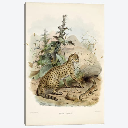 A Monograph Of The Felidae, Or Family Of The Cats By Daniel Giraund XI Canvas Print #NHM13} by Natural History Museum (UK) Canvas Print