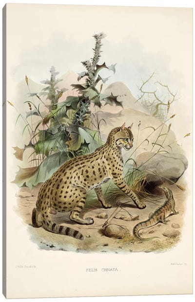 A Monograph Of The Felidae, Or Family Of The Cats By Daniel Giraund XI Canvas Art Print